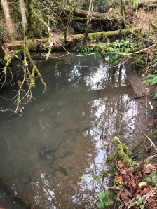 clearwaterstream